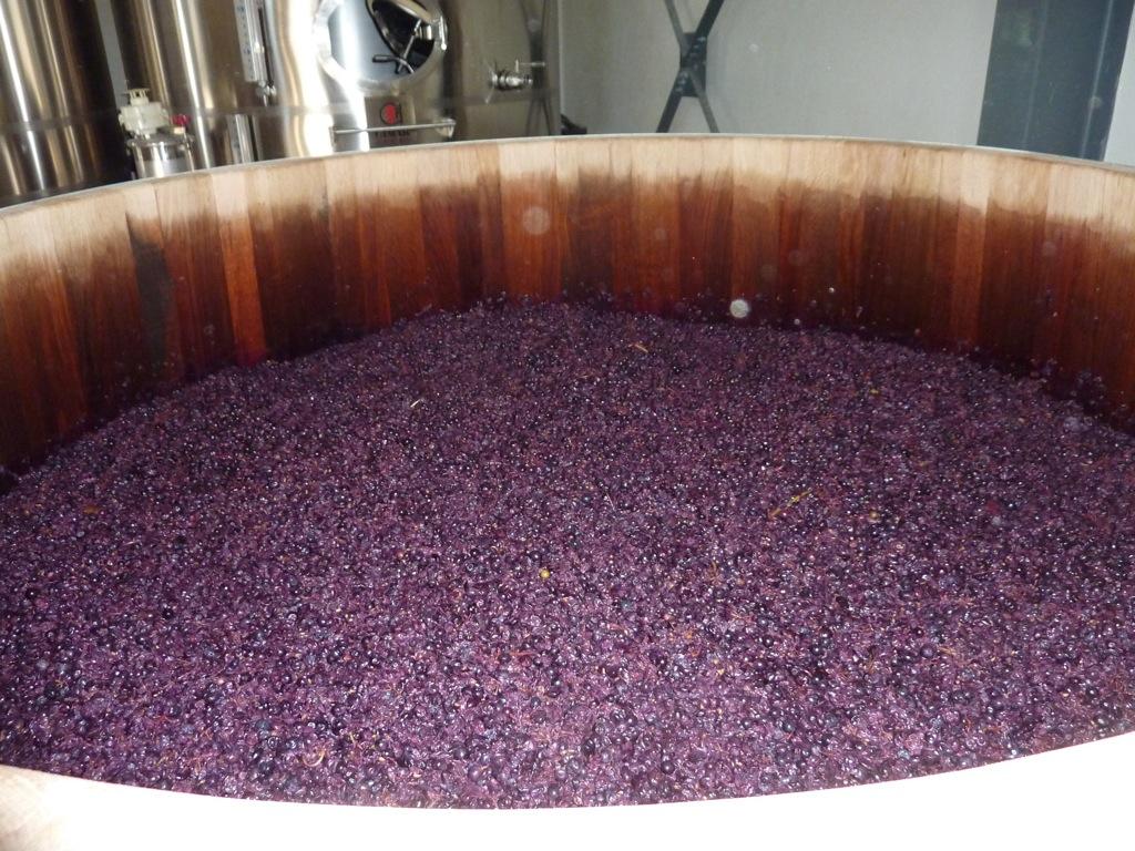 vinification foudre